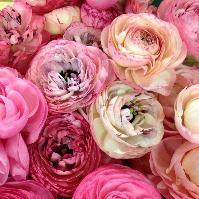 May feature ranunculus