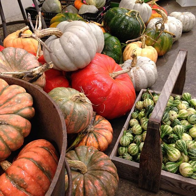 October feature pumpkins