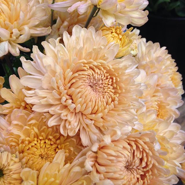 Sept feature mums
